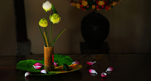hoa sen trang tri nhà cửa